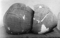 合口壺棺(館山市安房国分寺遺跡) 弥生時代