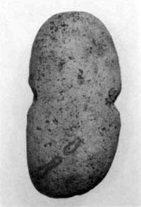 石錘(白浜町小滝涼源寺遺跡)古墳時代