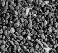 32.炭化米
