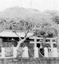 白浜町塩浦の浅間神社