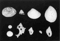 84.縄文時代の貝類