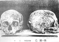 佐野洞窟遺跡出土人骨<br> 千葉県『史跡名勝天然記念物調査』4 1927より転載