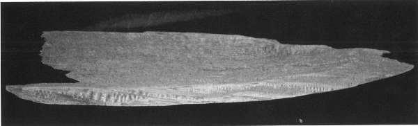 資料19.1956年 大寺山洞窟遺跡出土遺物 舟棺