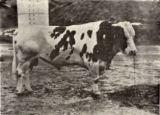 105.アイデアル号</br> 昭和3年(1928年)刊『安房郡畜産史』より
