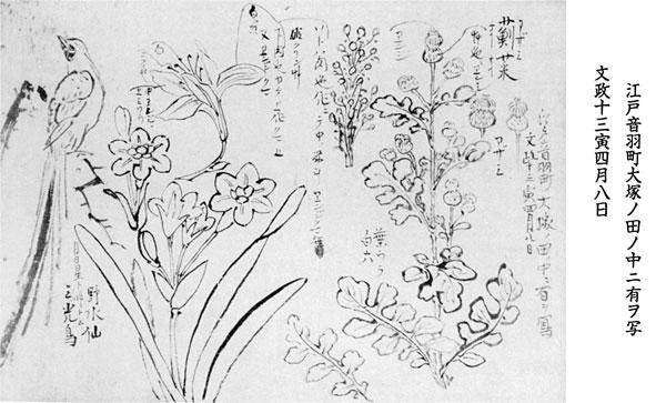54.山調画「草花図」 『草花図集』所収