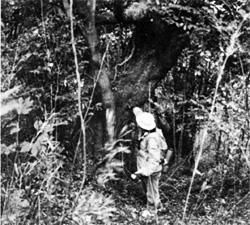 那古山自然林と那古寺(那古地区)