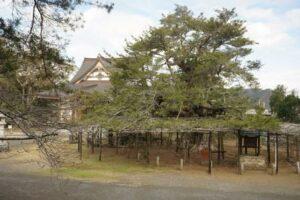 (18)小松原山鏡忍寺