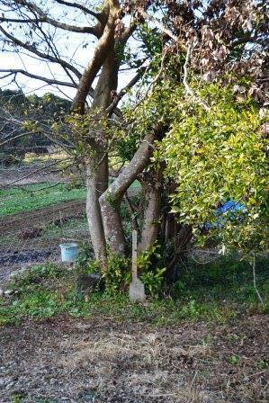 (3) 水神(すいじん)の森